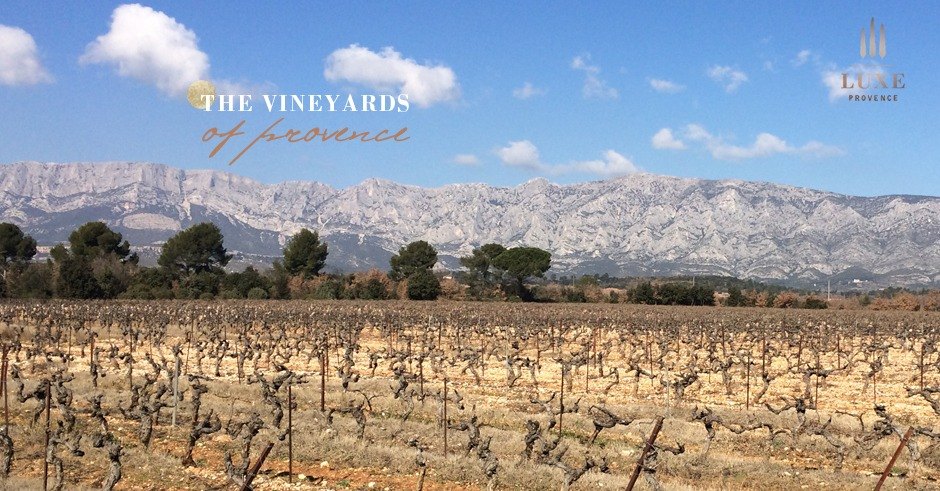 vineyards-st-victoire