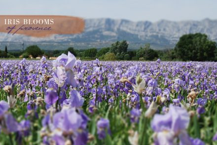 trets-iris-production-provence