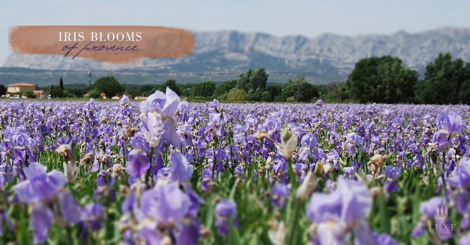 trets-iris-production-provence