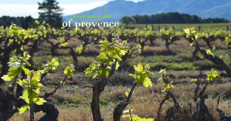 vineyards-of-provence-trets