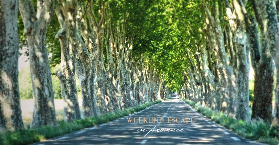 plane trees of provence