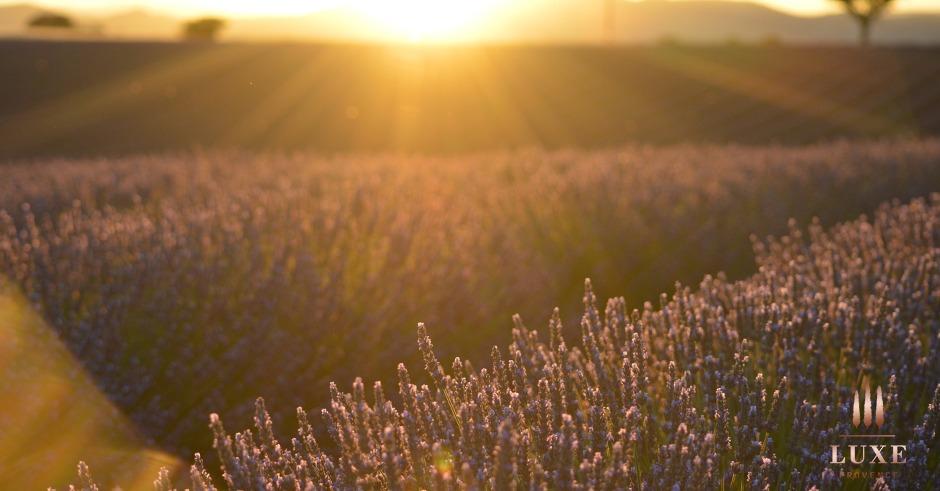 luxe-provence-plateau-de-valensole-lavender