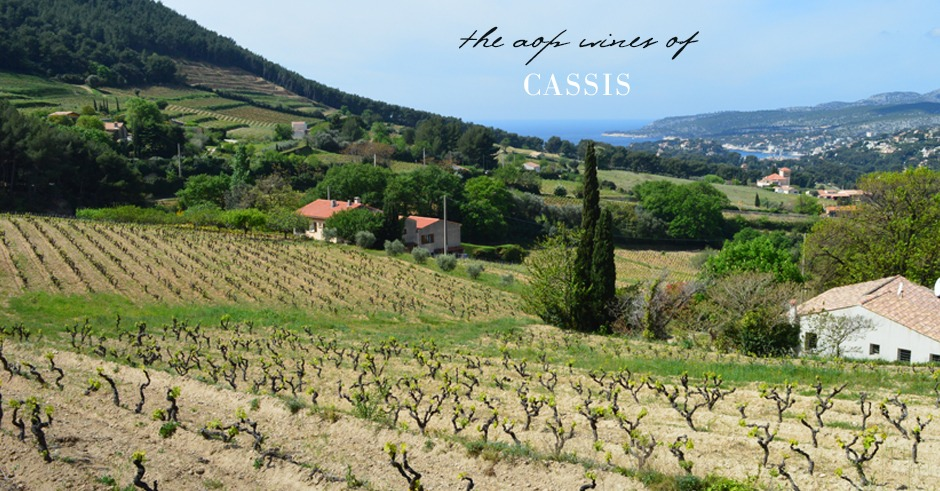 cassis wine tasting and travel guide