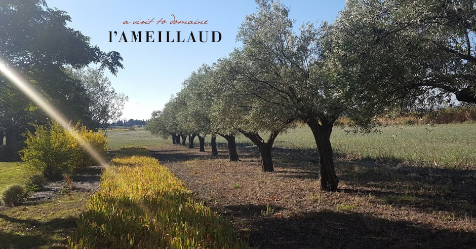 provence wine guide domaine l'ameillaud