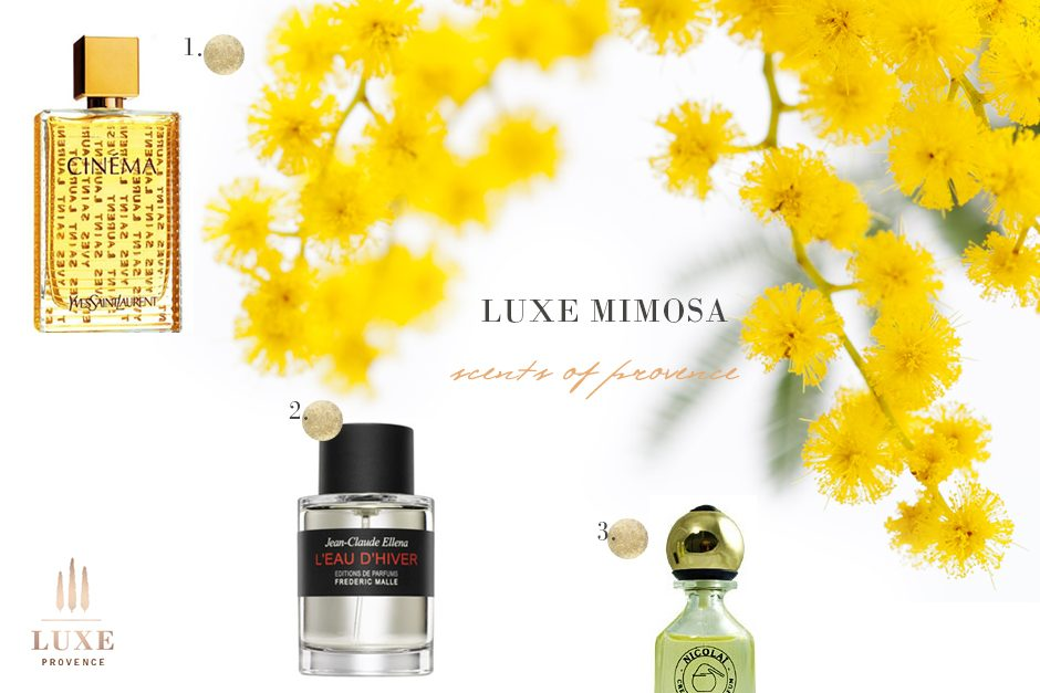 mimosa-lux-provence