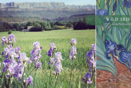 iris of provence